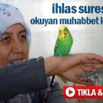 ihlas suresini okuyan muhabbet kuşu