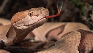 Kahve falında yılan görmek